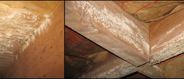 Mold Testing Atlanta Mold Removal Inspection Amp Prevention